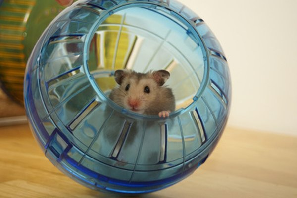 Is this hamster essay good?