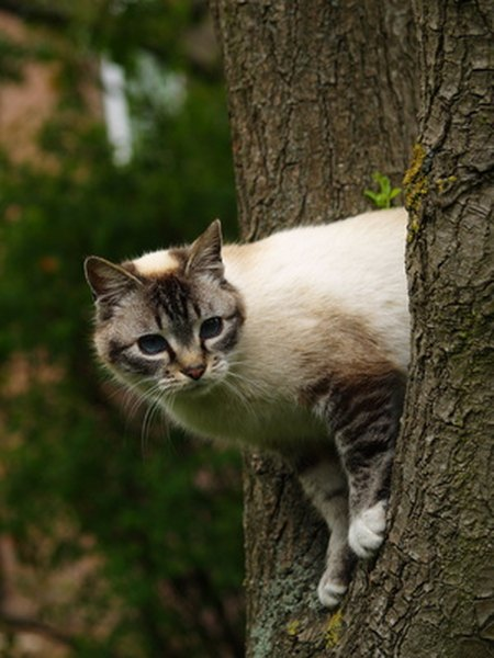 how to get a cat out of a very tall tree pets. Black Bedroom Furniture Sets. Home Design Ideas