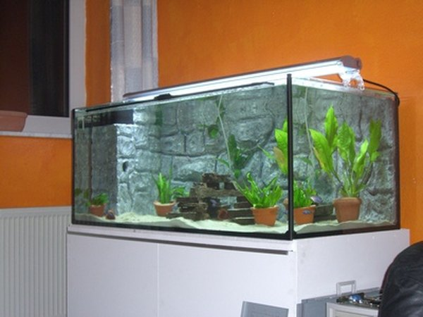How to set up a 10 gallon freshwater fish tank pets for Fish for a 10 gallon tank