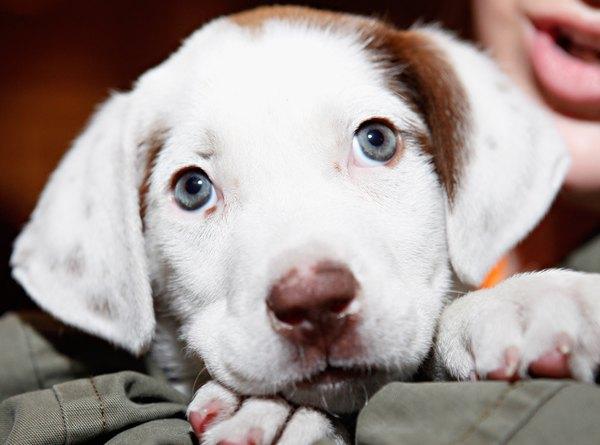 Bringing A Newly Adopted Dog Home