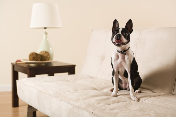 How To Clean Dog Hair Off Of Sofa Fabric Pets