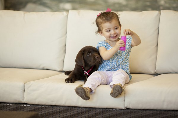 Let your dog sniff the baby's blanket or used clothes before they meet.