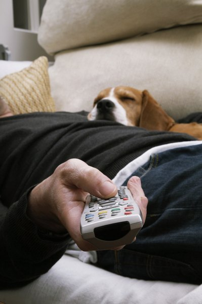 How to Keep a Dog From Eating Remote Controls