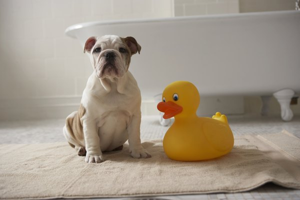 Some dogs just don't like to get into that tub.
