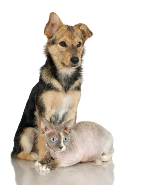 It's easier to teach a puppy to behave than a cat to tolerate.