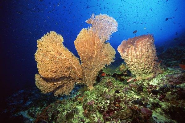 Different Sea Sponges | Animals - mom.me
