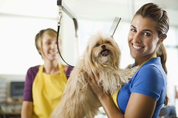 A good grooming and clipping should feel good for your dog.