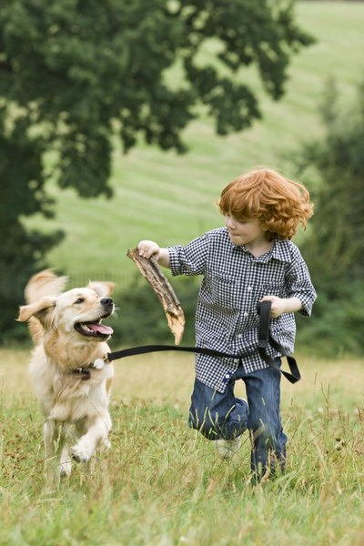 A well behaved dog can be enjoyed by the whole family.