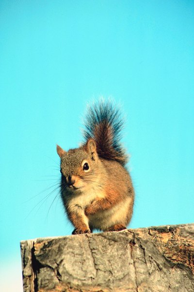 Yard Pests That Are Mammals Home Guides Sf Gate