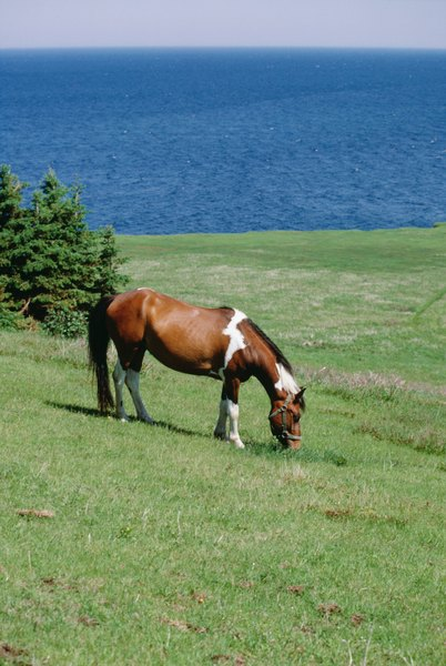 The Pasture Size For Horses