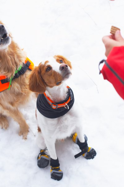 Booties help paws stay warm.