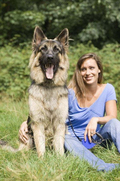 The majority of dogs affected by EPI are German shepherds.