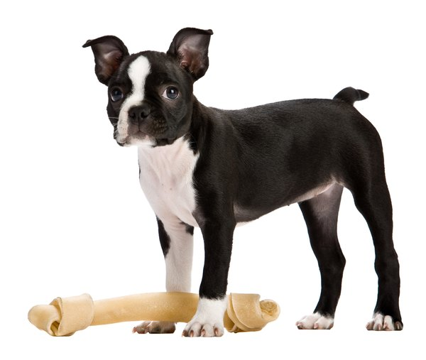 Despite their appeal, dog bones can lead to serious health concerns.