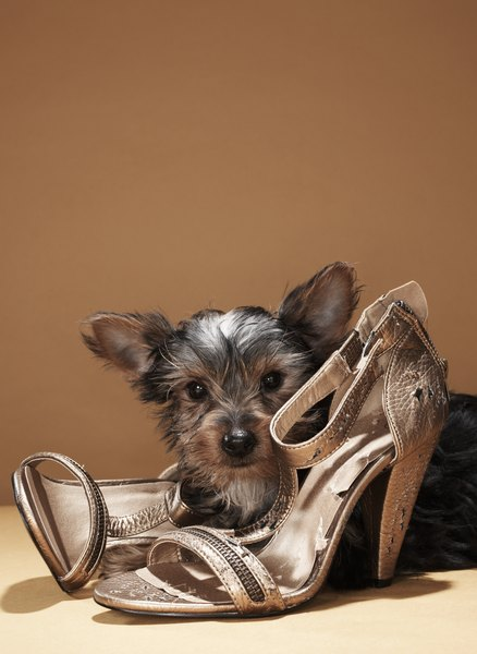 Correcting your dog's shoe-stealing fetish keeps your shoes intact.