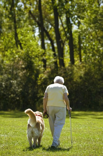 Older, large-breed dogs are more likely to need arthritis medications.