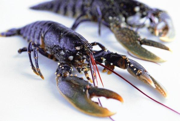 Arthropods: Characteristics, Anatomy & Groups | Study.com |Examples Of Exoskeleton Animals