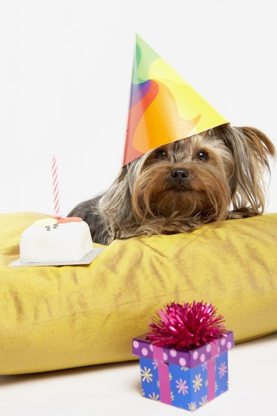 Birthdays are a great reason to celebrate by baking your dog an all-natural cake.
