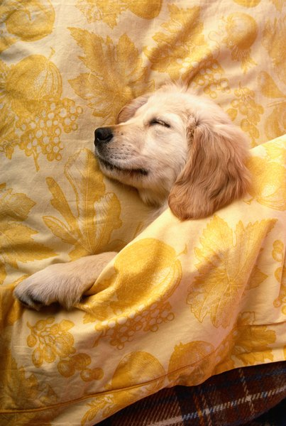 Getting your puppy to sleep through the night takes a bit more than tucking him in.