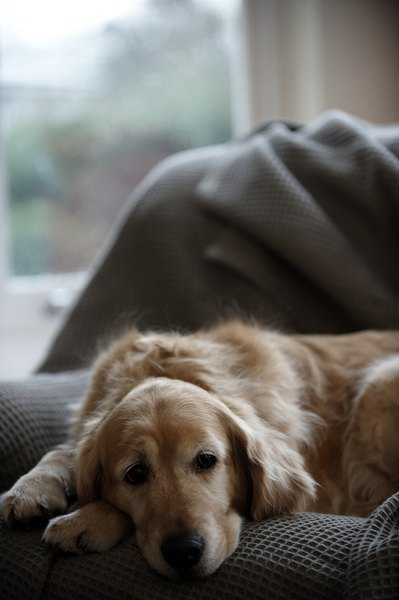 Excessive sleep may be a sign of depression in a grieving dog.