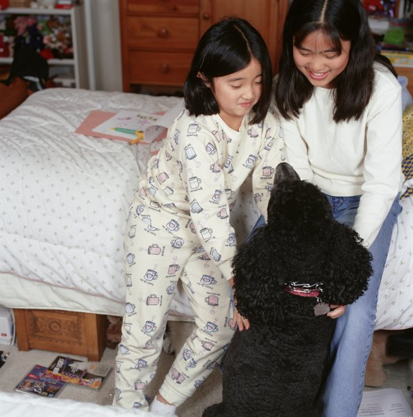 Poodles are great family dogs who shed little.