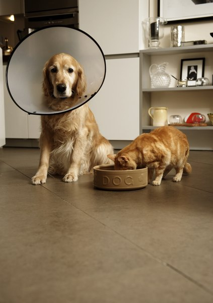 An Elizabethan collar serves to keep your dog from mouthing the irritated area or removing the anti-inch cream.