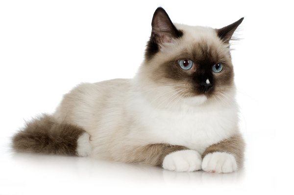 Pets Bacterial Infections In Cats