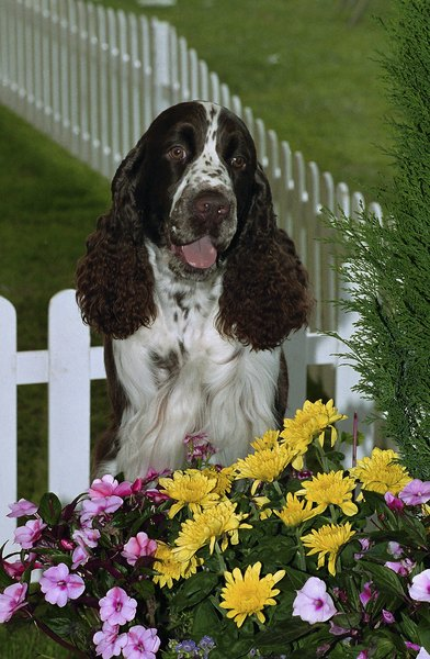 Who said you can't have a dog and a pretty flower garden?