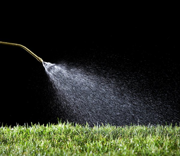 Water your grass thoroughly to dilute the dog urine so that your grass stays lush and green.