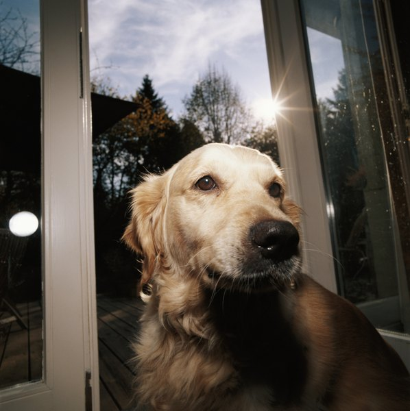 Reward your dog for going to the door.