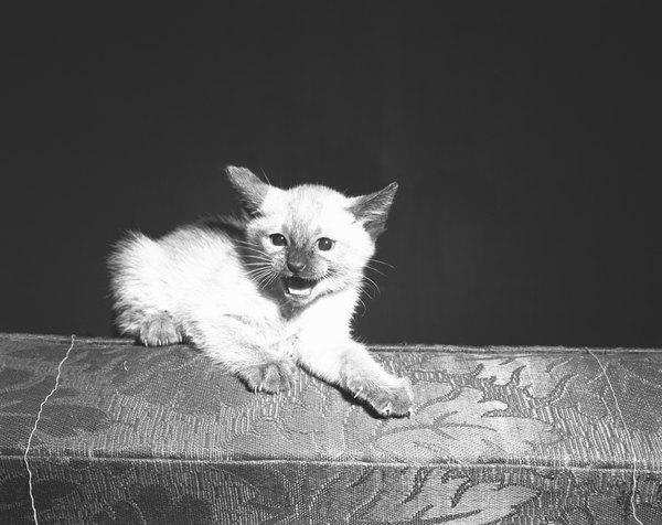 small wild cat species
