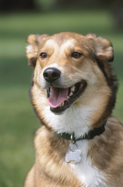 DNA testing can reveal the parentage of a mixed-breed dog.