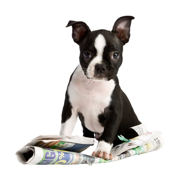 A puppy requires more protein than an adult dog, to help build muscle and bone.