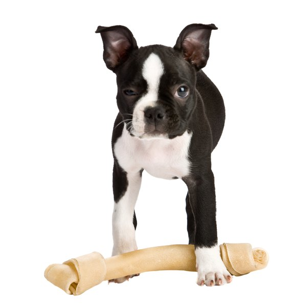 Provide a puppy with appropriate chew toys to keep him from chewing walls.