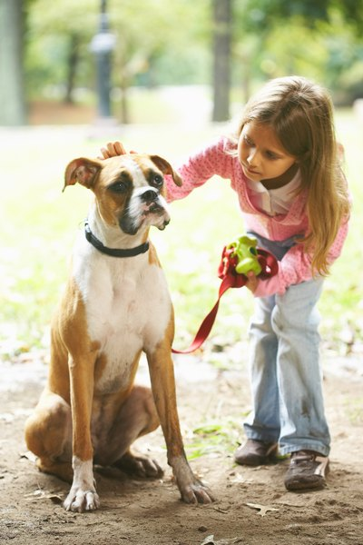 Run Off Insurance >> How to Train a Boxer Dog to Obey - Pets