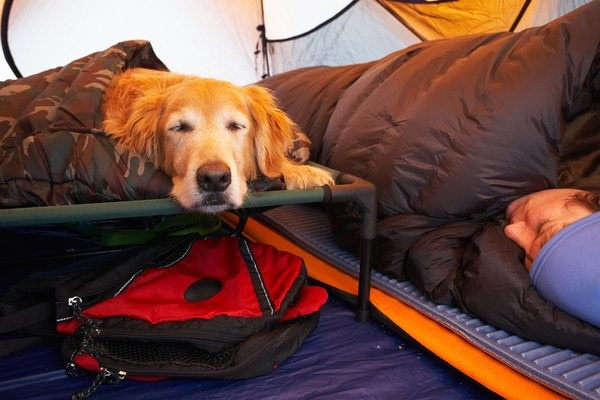 Elevated dog beds protect your buddy's hips and joints from stiffness that can occur from lying on hard surfaces.