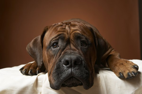 Your dog may shed a tear or two, but they're not from emotion.