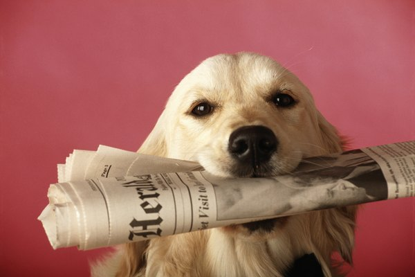 A pile of old newspapers is a classic indoor pooch potty.