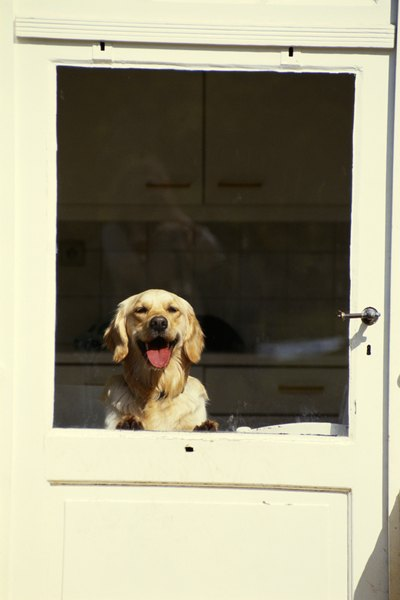 Dogs may see doors as sources of excitement and fear.