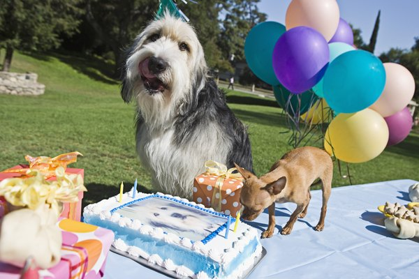Vanilla cake isn't the best treat for your dog -- even on his birthday.