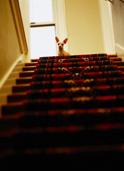 As your pup learns to navigate stairs, take it step by step. Pun intended.