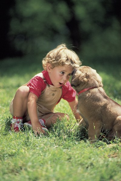 A puppy needs proper nutrition to grow strong, just like kids.