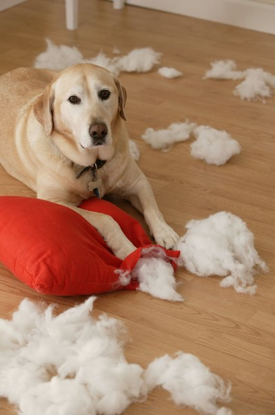 Keeping your dog entertained can prevent destructive behavior.