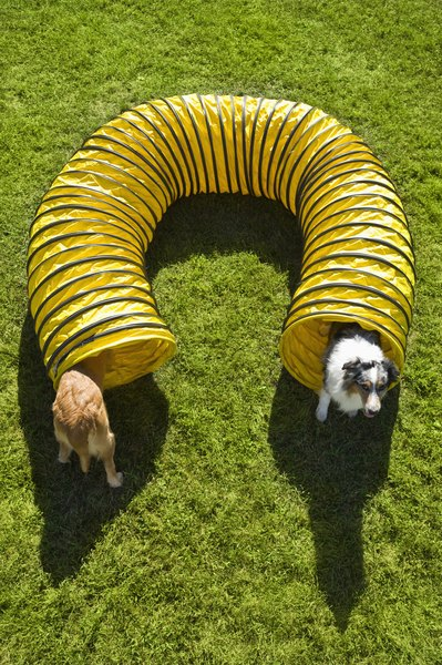 Obstacle Course Ideas For Pets Dog Care Daily Puppy