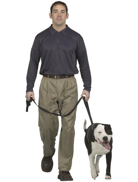 You can make a dog lead to suit your specific needs.