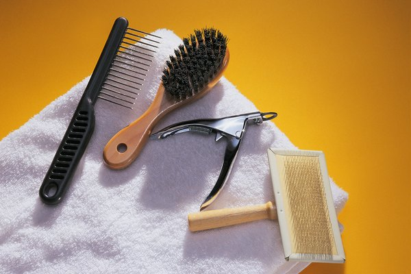 Pick up proper brushing tools to help your Akita while he sheds.