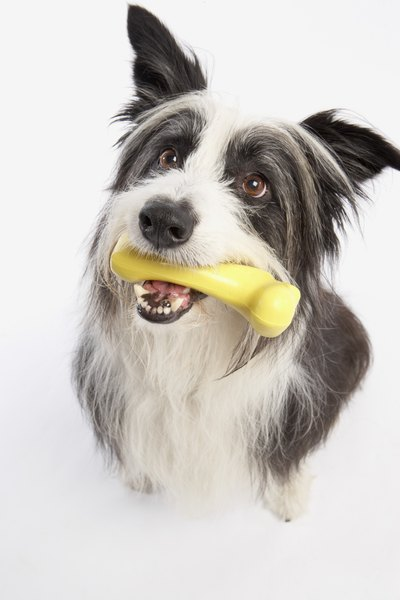 Appropriate chewing items can keep your dog from biting wires.