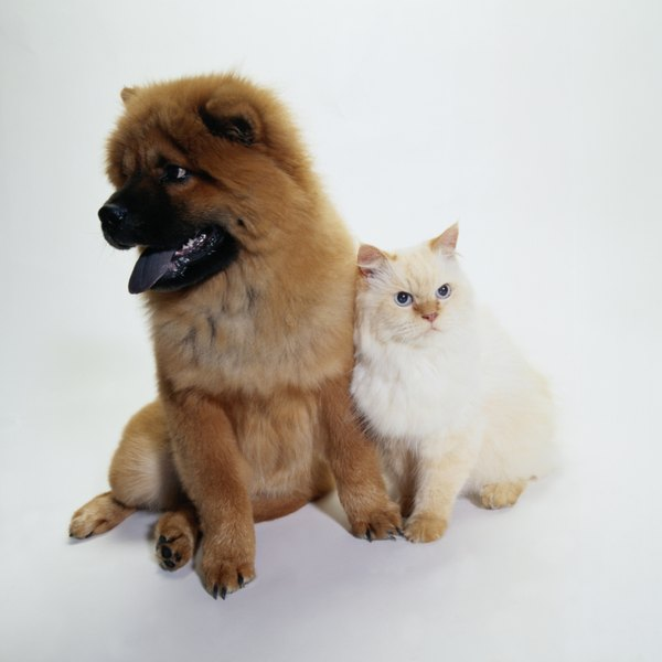 Choose grooming products based on your pet's specific need, then follow the directions for use.