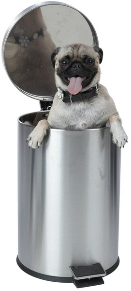 It can be a challenge to keep your dog out of the trash.