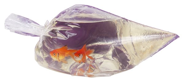 How long to let a goldfish bag sit in new water pets for Fish in a bag