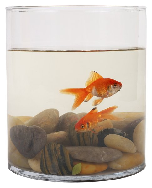 How to cure ichthyophthirius pets for Fungus in fish tank